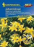 Johanniskraut | Johanniskrautsamen von Kiepenkerl