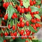 2016 5 tipos 200 / paquete de semillas de la baya baya grande SEED frambuesa Goji arándano Blackberry mora fresa Semillas Semillas de frutas