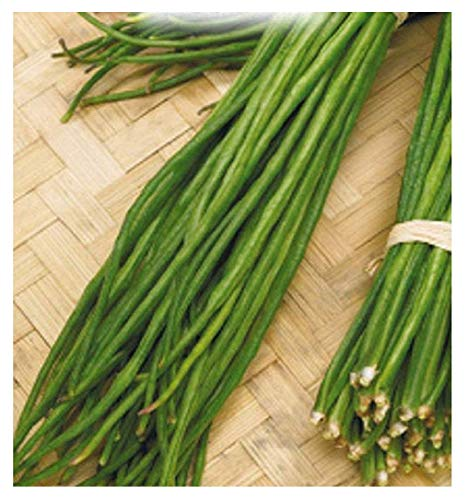 inception pro infinite 180 c.ca semi fagiolo rampicante verde mangiatutto metro seme nero - dolichos sesquipedalis in confezione originale prodotto in italia - fagioli rampicanti verdi - semi neri