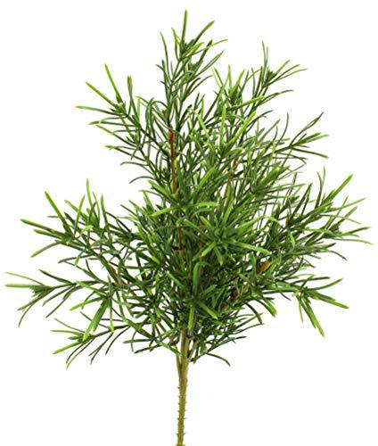 artfleur – 2er Set künstlicher Steineiben Busch Podocarpus Grünpflanze Kunstpflanze