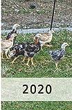 2020: Hühner/Eier Kalender/Landwirt/Hobbyzüchter/Legeaufzeichnung/Eier Legeleistung