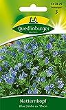 Natternkopf Blau von Quedlinburger Saatgut