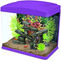 Interpet Fishbox LED Aquarium Fish Tank, 20 L - Pink