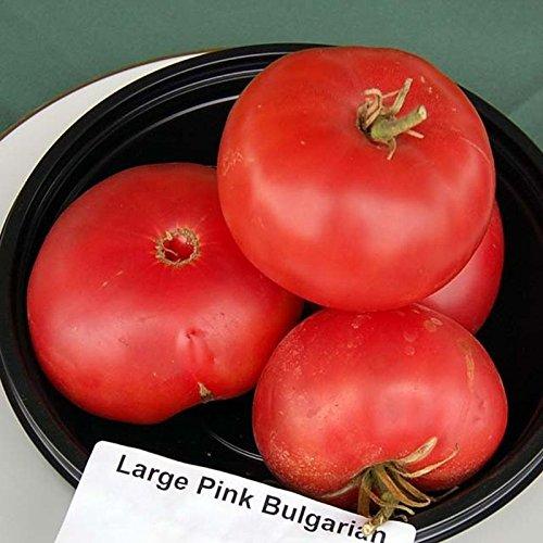 Go Garden 10 - Samen: Große Rosen aus bulgarischem Tomaten - A Heirloom Sorte aus Bulgarien Spaß! ! Rose Tomate