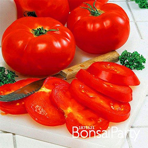 Förderung! Big Beef Hybrid Tomatensamen, 100 Samen / Beutel, Extra-large, extra-fleischig, Extra lecker Tomate, # SMMGK5