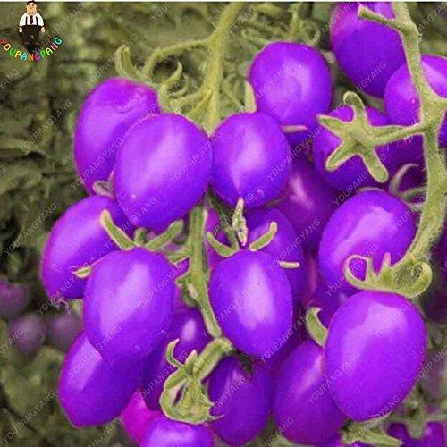 Seed 200 Stück Lila Obst Tomate Samen gesundes Gemüse und Früchte für Hausgarten Happy Farm Pflanzen Leicht Bonsai wachsen