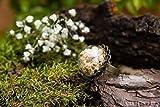 Anello di vetro e petali di Gypsophila - gioielli fatti a mano fiori naturali secchi - 20mm - regalo donna - Regalo di Natale