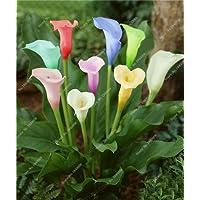 Nuovo Vero Calla Bulbi 2 pezzi 24 colori bulbi di fiori Calla in vaso Balcone pianta rizoma Bonsai Can radiazioni non assorbimento semi rossi verde
