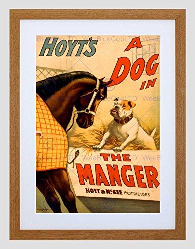 Preisvergleich Produktbild THEATRE PLAY STAGE DOG MANGER HOYT COMEDY VINTAGE ADVERT FRAMED PRINT B12X1344