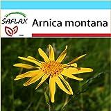 SAFLAX - Geschenk Set - Heilpflanzen - Echte Arnica - 40 Samen - Arnica montana