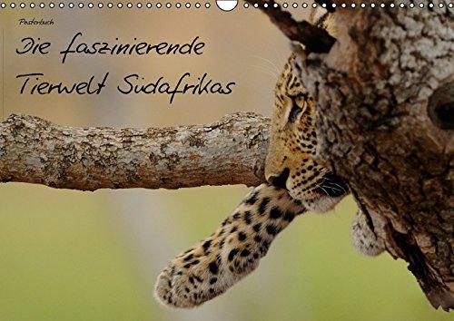 Die faszinierende Tierwelt Südafrikas (PosterbuchDIN A4 quer): Gehen Sie Safari durch Südafrika (Posterbuch, 14 Seiten) (CALVENDO Tiere) [Taschenbuch] [Nov 28, 2012] Schmalhofer, Christian (Cheetah Gehen)