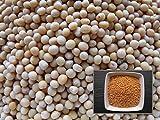 Senape Bianca–1grammo–Sinapis Alba L.–White Mustard–(fertilizzante Verde–Green Manure)–sem02