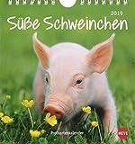 Schweinchen Postkartenkalender - Kalender 2019