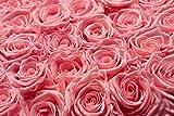 PARIS EN ROSE Sacré-Cœur Rosenbox (Flowerbox) mit konservierten Infinity Rosen