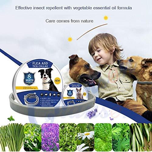 OOOUSE Zeckenhalsband für Hunde, Wasserdicht Verstellbarer Flohhalsband und Zeckenhalsband für Welpen Und Katzen, Natürliches ätherisches Öl Schädlingsbekämpfungskragen - 38cm