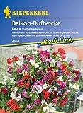 Balkon-Wicken Laura (Lathyrus odoratus)