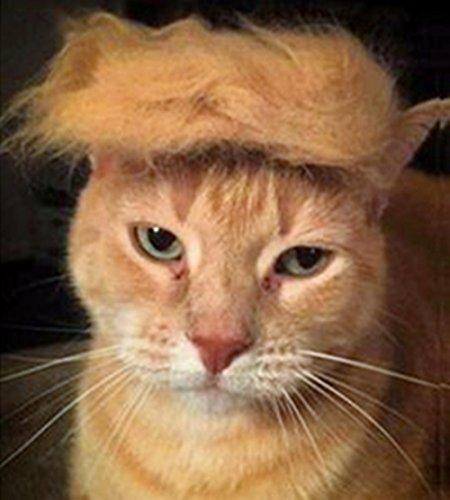 Katze Perücke Pet Kostüme Hund Kopf tragen Apparel Spielzeug für Halloween, Weihnachten, Partys, Festivals von Fuji