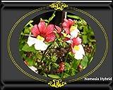 Nemesia 2018 The Magic of nature (English Edition)