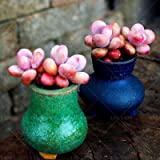 #9: Pinkdose® 200Pcsthe Peach Blossom Egg Stones Succulent Cactus DIY Home Bonsai Ornamental Indoor Plant for Home Garden