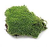 EMVANV erba artificiale verde plastica pianta erba sintetica muschio casa giardino decorazione ornamento, Green, Taglia libera