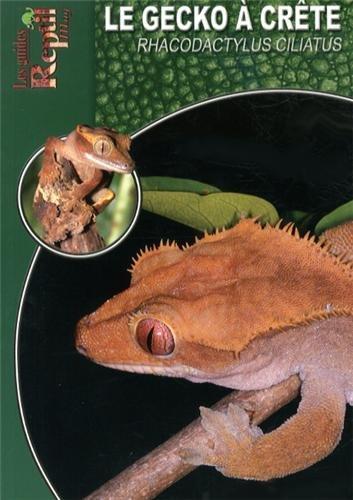 Le Gecko à Crête