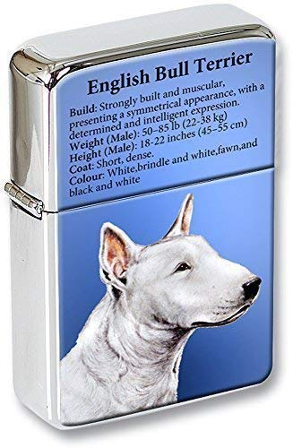Englischer Bullterrier Feuerzeug in Geschenkdose