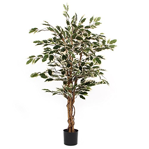 MICA Decorations Ficus Hawaii im Campana Topf Kunstpflanze