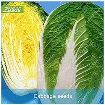 VISTARIC 11.11 Große Förderung! 200 PC/Los Salatsamen grün Gemüsesaatgut Würze in...