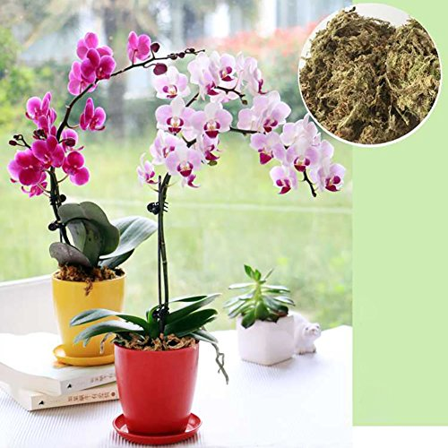 Sustrato de musgo esfagno deshidratado para cultivo de orquídeas Phalaenopsis, cultivo sin tierra, secado de forma natural, para bonsáis, reptiles o plantas tropicales