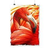 Pélican Oiseau Sauvage Animal Royal Visage Matte/Glacé Affiche A2 (60cm x 42cm)   Wellcoda