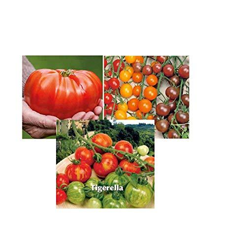 Tomates Brutus, Tigerella, cerises sweetie, Cereza, Bottondoro, Black Cherry, potager jardin ouvrier, pas cher