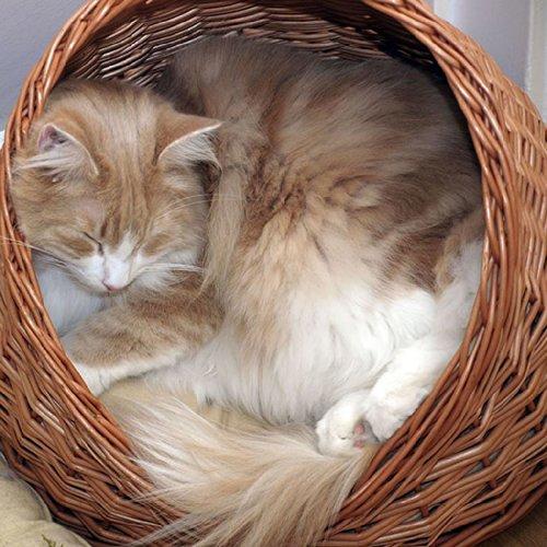2-9-18 Katzenhöhle / Katzenkorb aus Korbweide mit Kissen - 5