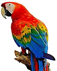 ArtzFolio Colorful Scarlet Macaw Aviary Unframed Canvas Painting 16 X 16Inch