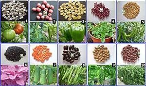 Seedstores : Hybrid Vegetable Seed Kit-1 for Kitchen ...