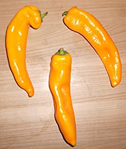 Gelber Ungarischer-Spitzpaprika 10 Samen -Sehr hoher Ertrag