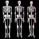 TecTake Anatomie