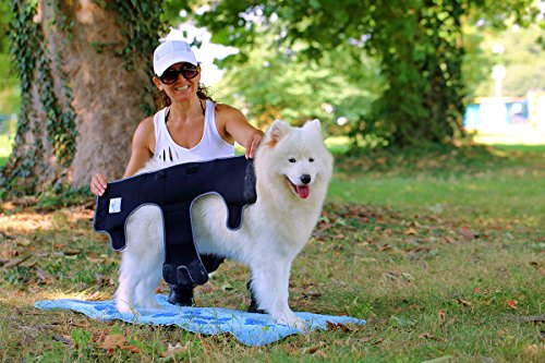 Läufigkeitshose, Läufigkeitshöschen, Größe L, Hundeschutzhose, Inkontinenzhöschen für Hunde - 5