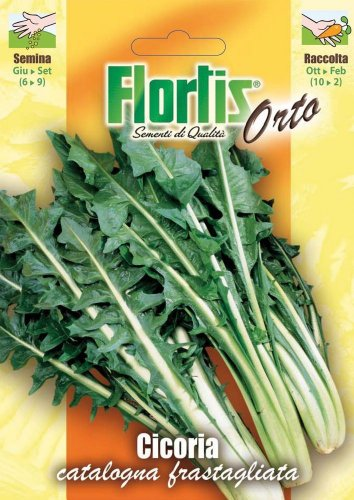 Salatsamen - Blattzichorie Catalogna Frastagliata von Flortis