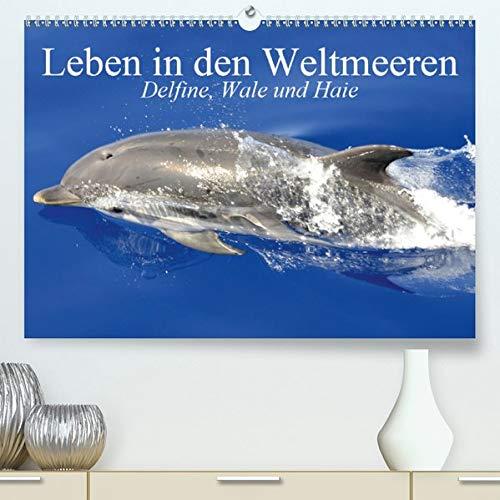 Leben in den Weltmeeren. Delfine, Wale und Haie(Premium, hochwertiger DIN A2 Wandkalender 2020, Kunstdruck in Hochglanz): Gleiten und Leben in den ... (Monatskalender, 14 Seiten ) (CALVENDO Tiere)
