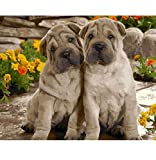 CYKEJISD Puzzle 1000 Pezzi Due Cani Fai da Te Decorazioni da Parete Classic Puzzle 3D Puzzle Toy Gift in Legno