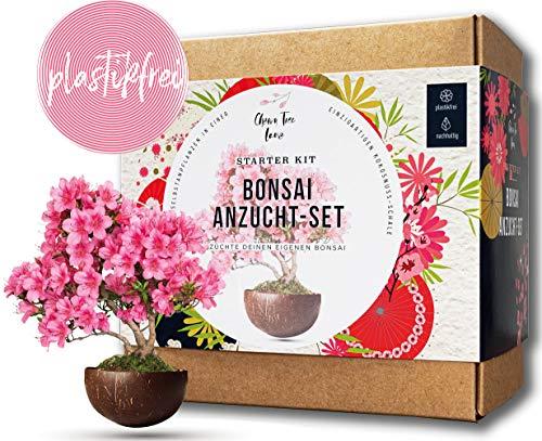 Dein eigener Bonsai in einer Kokosnuss-Pflanzschale - Bonsai Starter Kit - ökologisches Bonsai Kit - 2 tolle Bonsai Bäume im Bonsai Anzuchtset mit Samen - toll für Anfänger - ideales Geschenk
