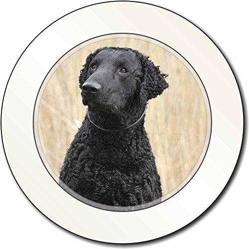 Curly Coat Retriever Hund AutovignetteGenehmigungsinhaber Geschenk (Curly Coat Retriever)