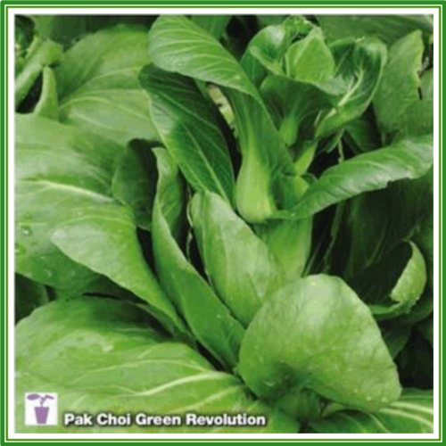 ajp-pak-choy-green-revolution-seed