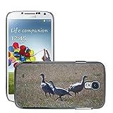 Grand Phone Cases Bild Hart Handy Schwarz Schutz Case Cover Schale Etui // M00141005 Cape Barren Gänse Gänse Tier // Samsung Galaxy S4 S IV SIV i9500