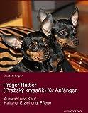 Prager Rattler (Praský krysarík) für Anfänger. Auswahl und Kauf, Erziehung, Haltung, Pflege
