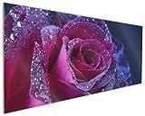 Wallario Küchenrückwand aus Glas, in Premium Qualität, Motiv: Rote Rosenblüte im Regen | Spritzschutz | abwischbar | Pflegeleicht