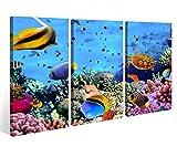Leinwandbild 3 Tlg. Fische Korallen Riff Unterwasser Leinwand Bild Bilder auf Keilrahmen Holz - fertig gerahmt 9O954, 3 tlg BxH:120x80cm (3Stk 40x 80cm)
