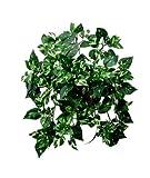Potos Variegato - Cespuglio Artificiale Idoneo Uso Esterno - Resistente ai Raggi U.V. Certificato TUV - 240 foglie - Alto 40 cm circa