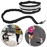 Cinturón Elástico Running Dog Leash Plomo Deportes Jogging Walking Envío Cintura Correa Del Perro Collar Del Animal Doméstico Cuerda de Mano Set Envío Gratis (Negro)