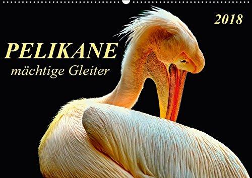 Pelikane - mächtige Gleiter (Wandkalender 2018 DIN A2 quer): Pelikane - tollpatschige Läufer und elegante Gleiter. (Monatskalender, 14 Seiten ) (CALVENDO Tiere) (Läufer-welt Kalender)